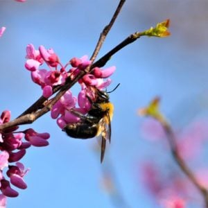 Flight of the Bumblebee – Nikolai Rimsky-Korsakov, Virtual Piano