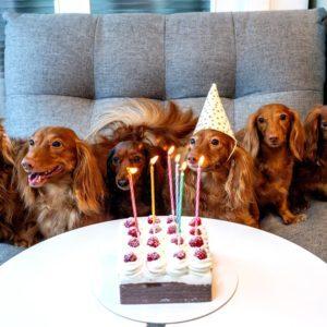 Happy Birthday, Virtual Piano